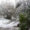 Первый снег.14.10.2007. (1).JPG