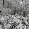 Первый снег.14.10.2007. (5).JPG