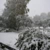 Первый снег.14.10.2007. (6).JPG