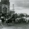 Эавкуация скота из Можайска. Осень 1941 г.