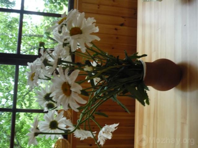 Лето.Люблю цветы,