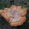 вот такой гриб возле дома