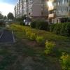 12 сентября прошла акция по озеленению двора
